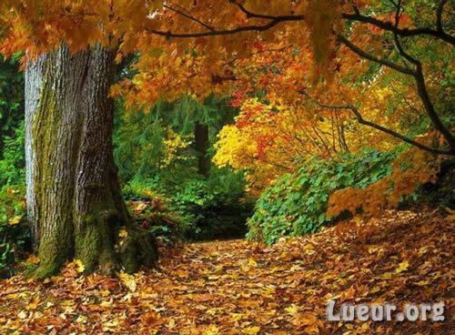http://www.lueur.org/e-cartes/pics/automne001.jpg